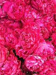 The Pink Peonies by Lush Pink Peonies Oh So Lovely Ten Times Better Than Roses