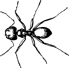 ant free stock photo illustration of a carpenter ant 11277