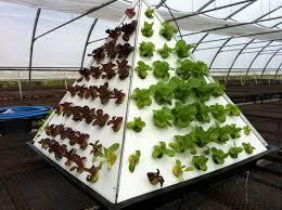 Pyramid Gardening Organic Veggies Hydroponic Aeroponic Diy