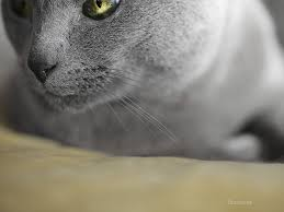 heart disease the most common cause of sudden death in cats