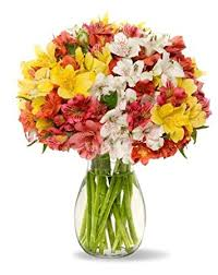 peruvian lilies benchmark bouquets assorted peruvian lilies with