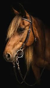 best 25 horse head ideas on pinterest horse horse cartoon and