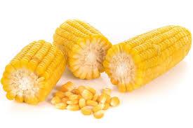 cuisiner du mais tout sur le maïs le choisir le conserver le cuisiner
