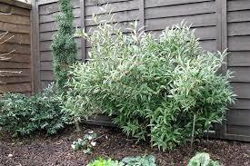 Winter Gardening Ideas 9 Winter Garden Plants That Dazzle Even When It Snows Flowering