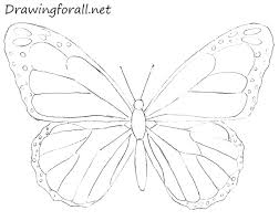 beautiful butterfly drawing ideas for drawing ideas