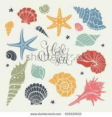 seashells stock images royalty free images u0026 vectors shutterstock