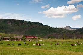 Seeking Ranch Vista Verde Ranch Seeking Motivated Enthusiastic Individuals To