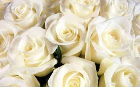 White Rose Bouquet White Roses Photography Freespywarefixescom