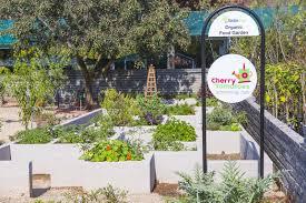 Urban Vegetable Garden by Urban Organic Vegetable Gardens Flourish In Gauteng Agriorbit