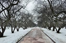 moscow walks kolomenskoye u0026 botanical gardens in early spring