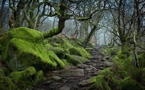 forest tree landscape nature moss landscapes landscaping