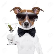 birthday martini white background party dog toasting with a martini glass with olives stock photo