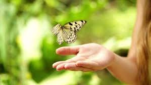 has a butterfly in stock footage dissolve