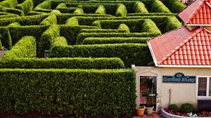 ideas for garden mazes hgtv