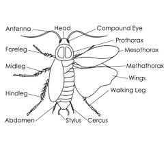 roaches shot tulsa exterminators