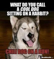 Cool Dog Meme - dog humor god is dog spelled correctly i m mimi please meme me