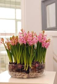 How To Grow A Bulb In A Vase 233 Best Garden Bulbs Planting Ideas Images On Pinterest