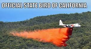 California Meme - official state bird album on imgur