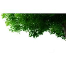 tree corner polyvore