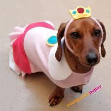Weiner Dog Halloween Costumes Princess Peach Dog Halloween Costume Decorate