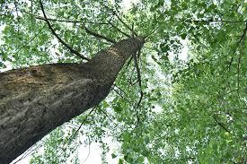 free photo green leaf woods big trees free image on pixabay