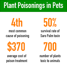 poisonous plants to cats and dogs healthy paws