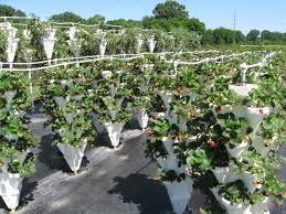 barber berry farm goes high tech state by state gardening