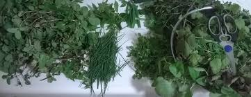 fresh herbs in winter wild and homegrown alternatives to the