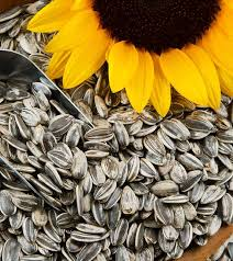 34 amazing benefits of sunflower seeds for skin hair and health