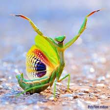 Mantis Meme - praying mantis don t give a damn meme generator