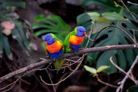 colorful birds free pictures pixabay