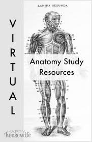 Pgcc Anatomy And Physiology Lab Practical Skin Model Skin Model Labels Pictures Anatomy Lab Pinterest