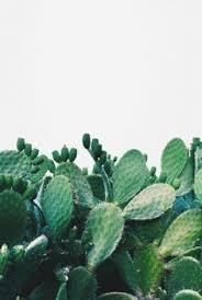 cactus plants inspo pinterest cacti plants and outdoor