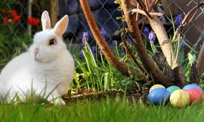 kids easter who refused to tell foster kids easter bunny is real had