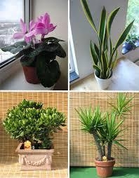 unusual urban planting 5 different types of gardening urbanist