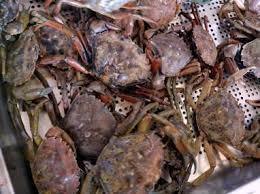 préparer un plateau de fruits de mer conseils de chef pour