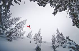 snow snowboarding pine trees wallpapers hd desktop and mobile