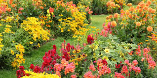 ornamental flowering plants for autumn colour the garden of eaden