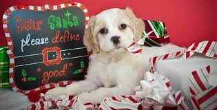 presents 15 gift ideas your will pet