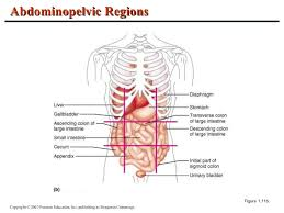 Human Anatomy And Physiology Chapter 1 Anatomy And Physiology Chapter 1 Introduction To Anatomy And Physio U2026