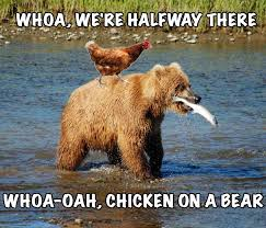 Funny Bear Meme - smart alecs on twitter such a classic music funny bear chicken