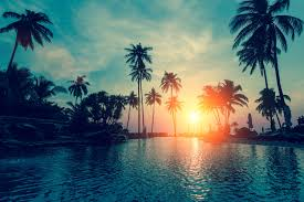 wallpaper sunset palm trees tropical hd nature 6500