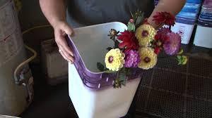 Dahlias As Cut Flowers Youtube