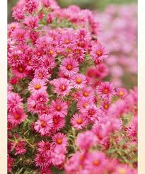 fall blooming flowers 29 best the garden in fall images on pinterest flower gardening