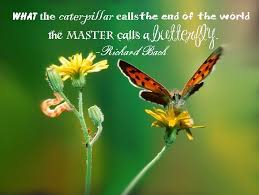 butterfly quote of the day yellowstar essentials