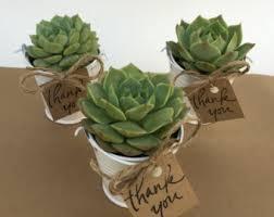 Flower Pot Wedding Favors - plant favor etsy