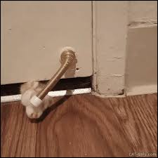 funny door stops cat gif playfull kitty playing with door stop with his paw under