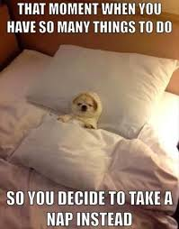 Funny Saturday Memes - funny animal pictures of the day 25 pics my kind of humor lol