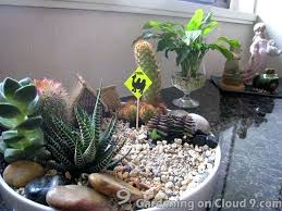 indoor cactus garden indoor gardening indoor garden gallery of