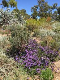 native plants of western australia downunder connecting with my inner outback u2014 betsy herbert u0027s writing